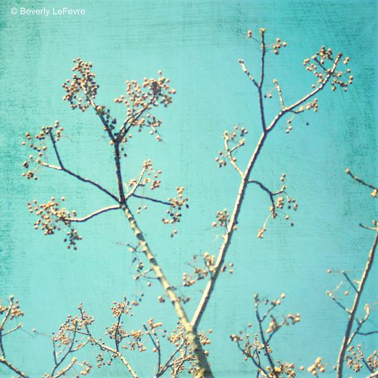 spring time blue