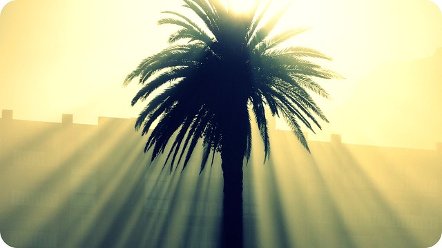 Sunday Palm Tree
