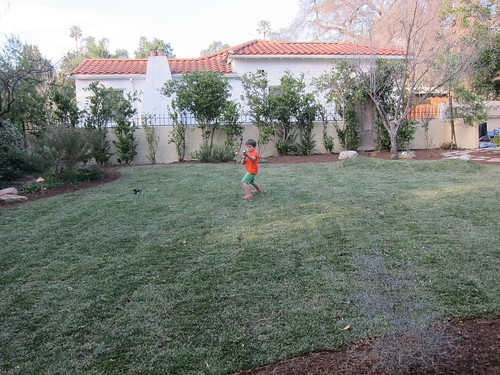 Finn enjoys the new lawn