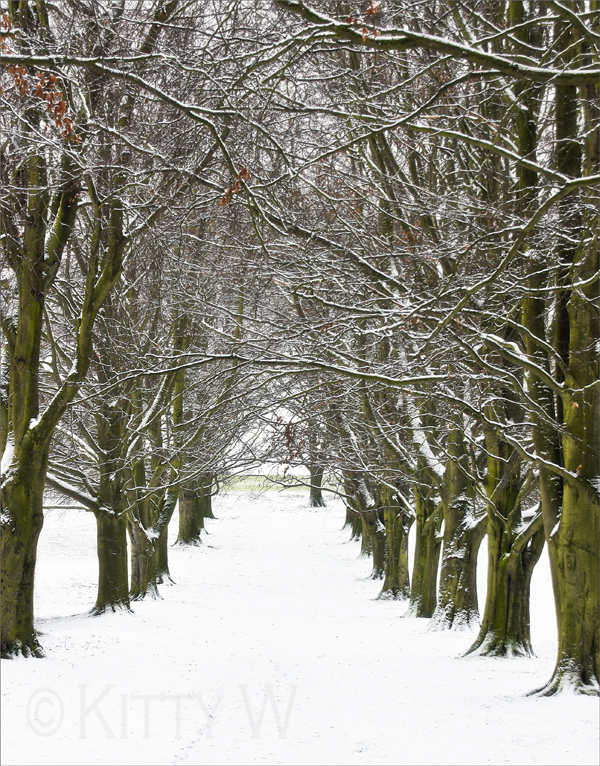 A Walk In The Park ... Winter Style