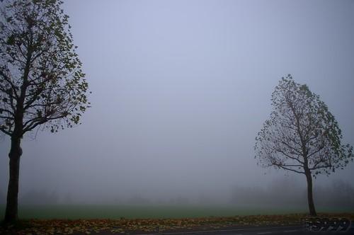 Autumnal Fog by fs999