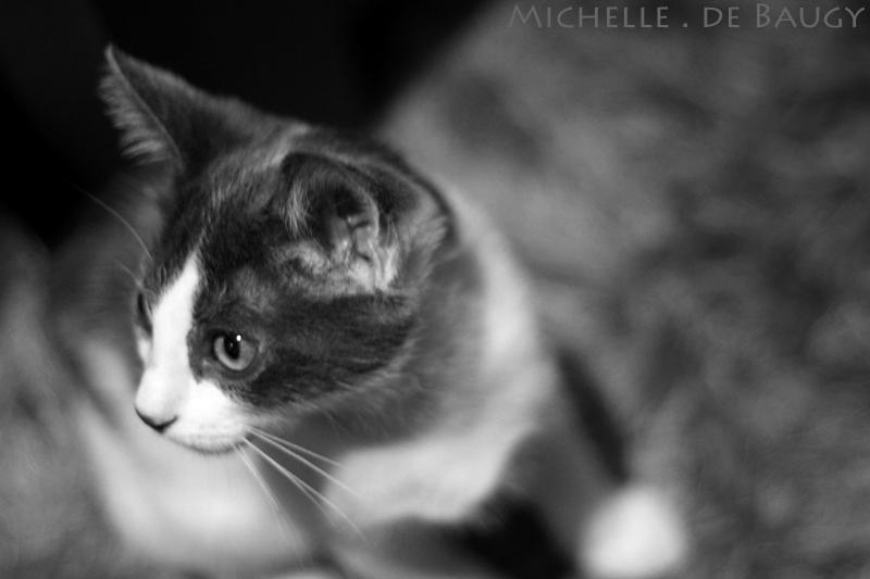 kittenblog008