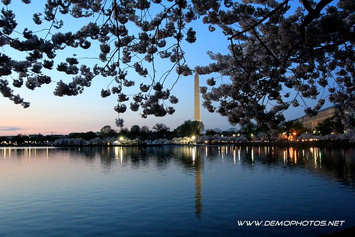 Cherry Blossoms at Night by DEMO PHOTOS by DeMond Younger