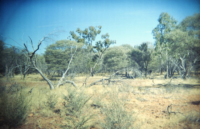 Bushland, Idalia National Park