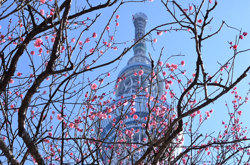 Plum and Tokyo Sky Tree