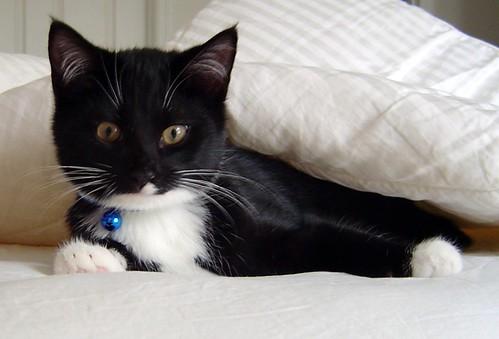 2012-02-20-02-Gus