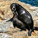 Sea lion Mom and Pup