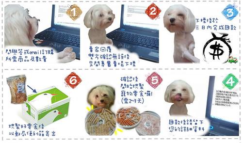 1mei3dog-3