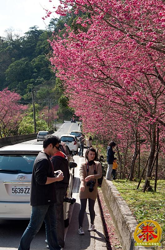 02.10-說好的櫻花呢!-4