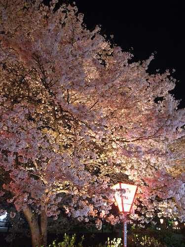 夜桜2012@大中公園(大和高田市)-07