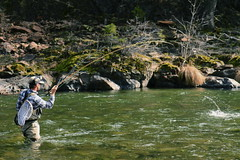 Northern California fly fishing guide Anthony Carruesco hooks up in an emerald Upper Sacramento run