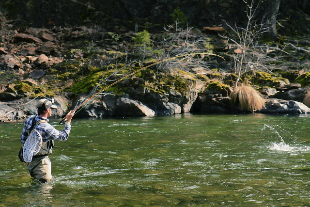 Northern california fly fishing guide anthony carruesco for Trout fishing northern california