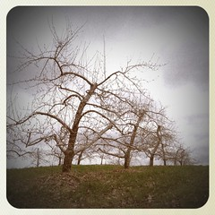 Woodmont Orchard