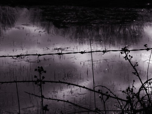 Photograph of a pond behind a barbed wire fence with shadowed flowers