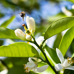 The Ultimate Pollinator