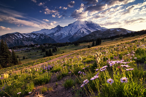 park flowers sunset mountain sunrise washington meadow mountrainier mountrainiernationalpark wildflowers
