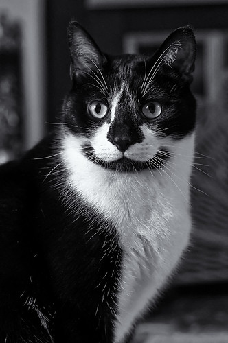 [フリー画像素材] 動物 1, 猫・ネコ, モノクロ ID:201204281000