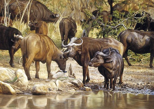 "'Buffalo by Water' oil on board 21"" x 30"