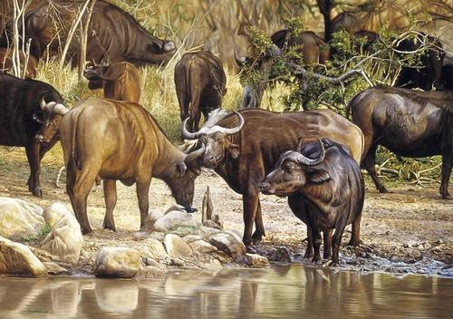 """'Buffalo by Water' oil on board 21"""" x 30"""