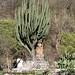 Small photo of Mexico: Entre Amigos in Urique