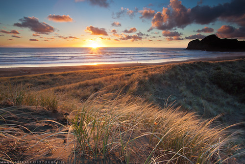 light sunset newzealand seascape grass landscape coast auckland aotearoa tehenga bethellsbeack westcopast