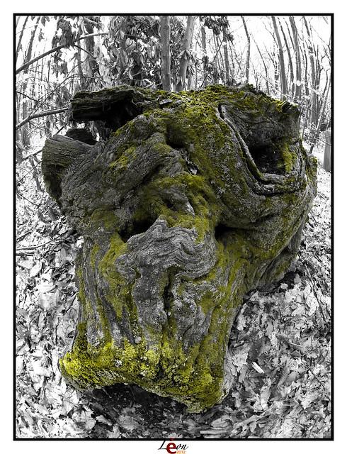 Le peuple de la forêt - Page 4 6984842168_895d985efa_z