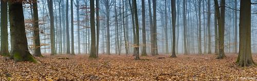 blue trees france tree nature colors forest canon landscape couleurs bleu arbres 5d canon5d paysage arbre labyrinth forêt feuilles picardie labyrinthe beauvais oise laneuville bluelabyrinth laneuvilleenhez mandraque nivoliers pierrenivoliers