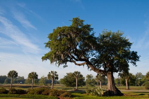 road oak palm charleston danielisland