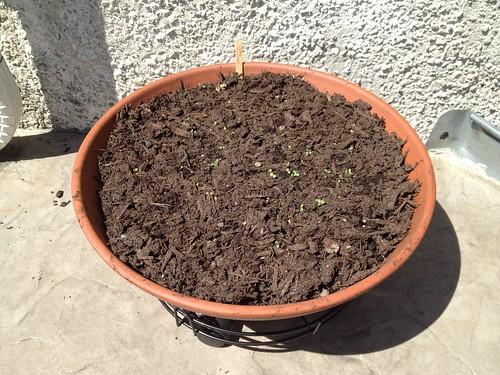 Lettuce Pot