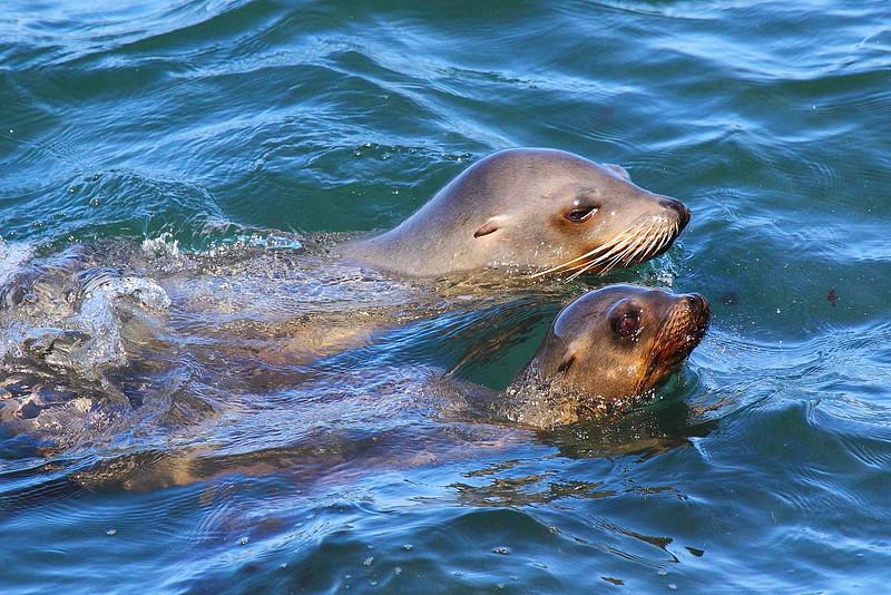 IMG_7571 Sea Lion