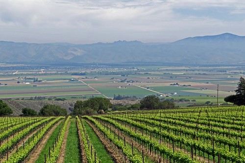 california vineyard carmel soledad santaluciahighlands hahnfamilywines