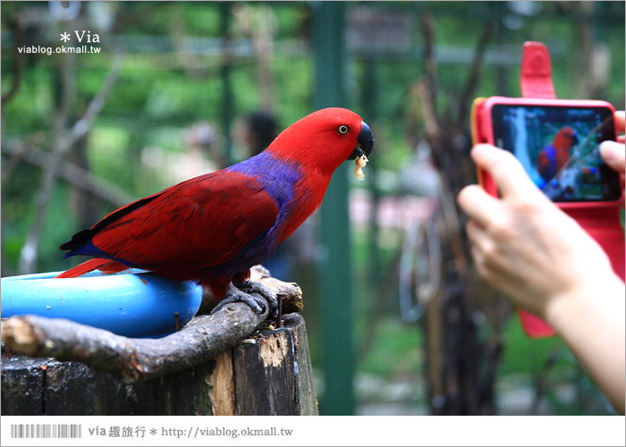 【新竹景點推薦】森林鳥花園~親子旅遊的好去處!在森林裡鳥兒與孩子們的樂園52