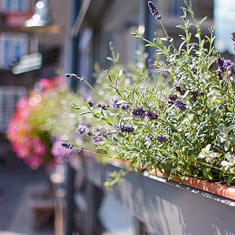 Trochę cieplna i słońca i dookoła robi się tak pięknie 😊 #babielato #kwiaty #balkon #dof