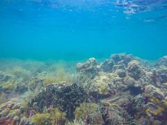 Korallen in Panama