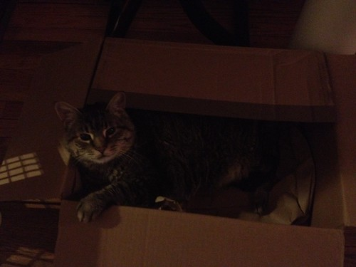 Parker in a box