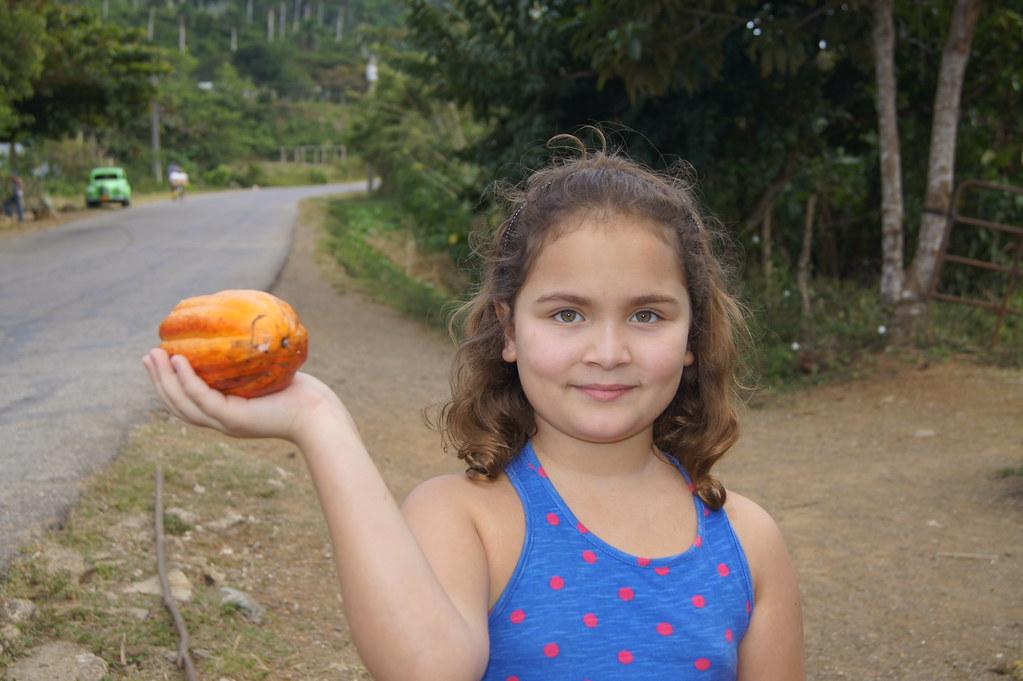 Cocoa fruit, Las Terrazas