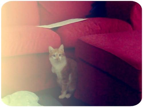 金針在看我了...這麼優雅有氣質的貓,愛死你了!! by 南南風_e l a i n e