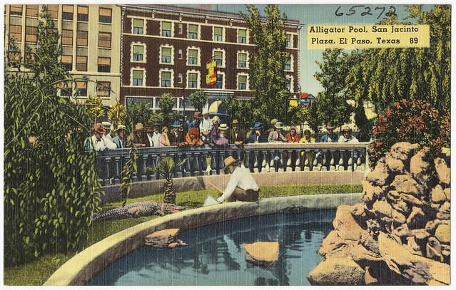 Alligator pool san jacinto plaza el paso texas 89 for The garden pool el paso