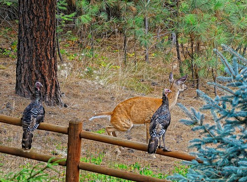 Deer Turkeys
