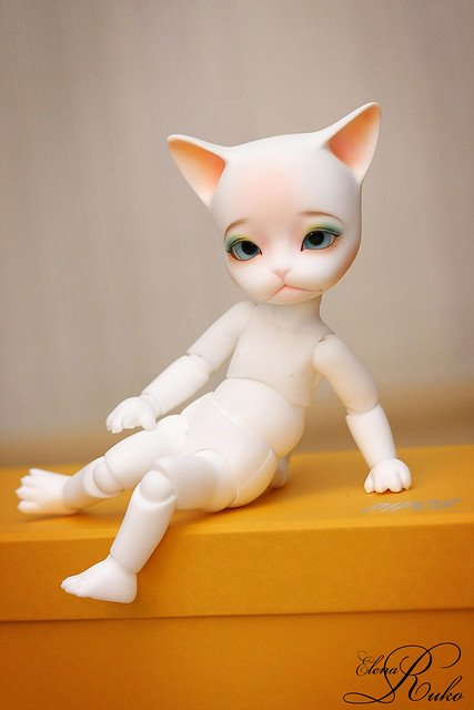 New cat <img class=