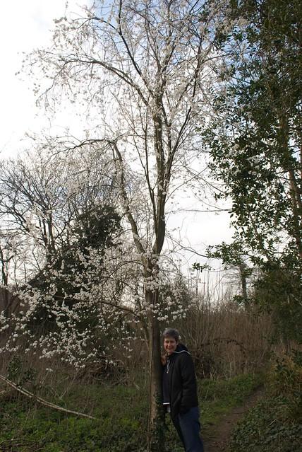 DSC_3616 wild Plum tree