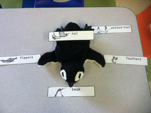 Labeling the Penguin Activity (Photo from Discovery Kidzone Montessori Adventures)