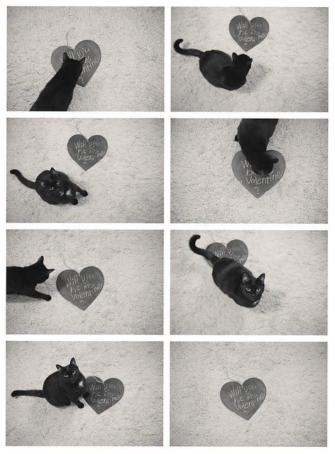 Happy V-Day, black cat photography by twoguineapigs pet photography