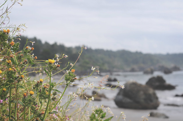 beach wildflowers