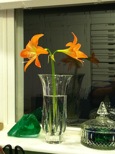 orange amaryllis from my mother