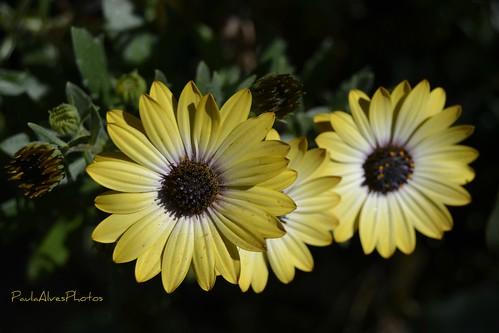 Chegou a Primavera by Paula C Alves