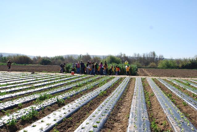 San Diego Organic Farm Tours
