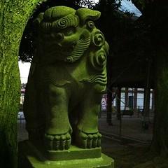 狛犬探訪 旗岡八幡 本殿前の狛犬も鳥居の前も子連れではない。これは鳥居前
