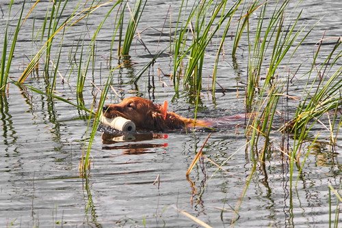 Copper in the reeds