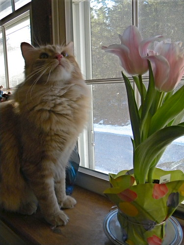 Rory & tulips